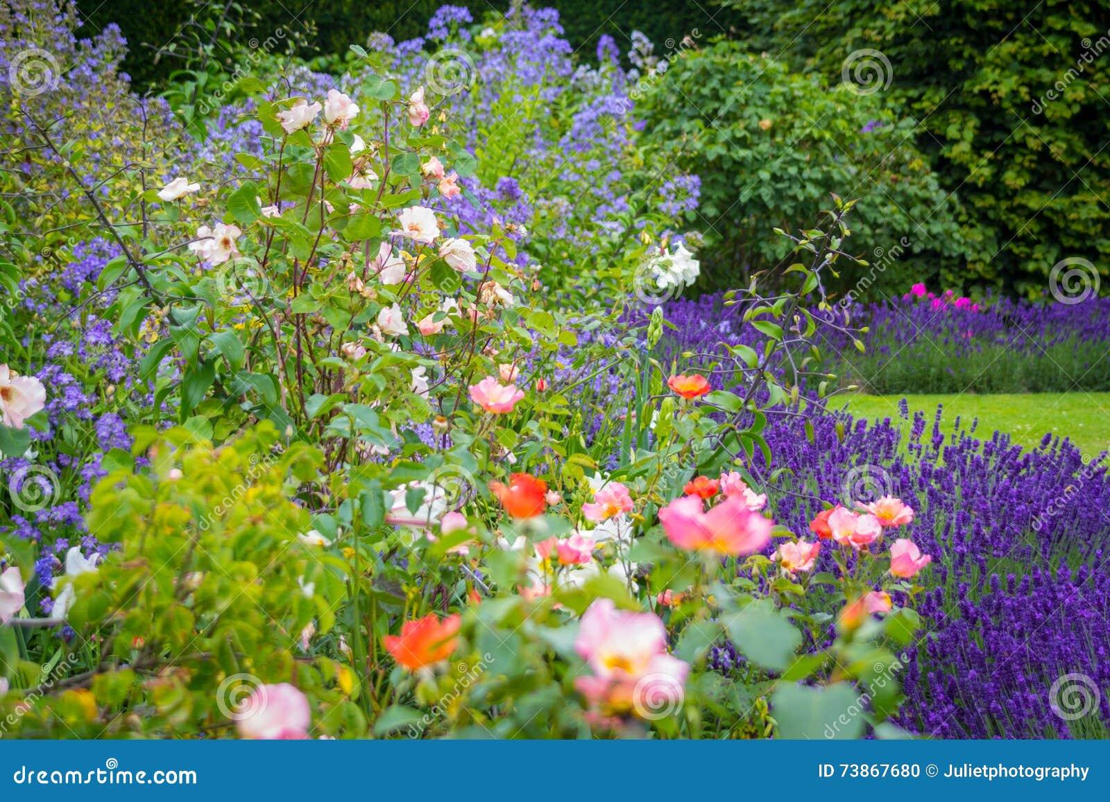 Giardino di estate bello con lavanda e rose fotografia - Giardino con rose ...