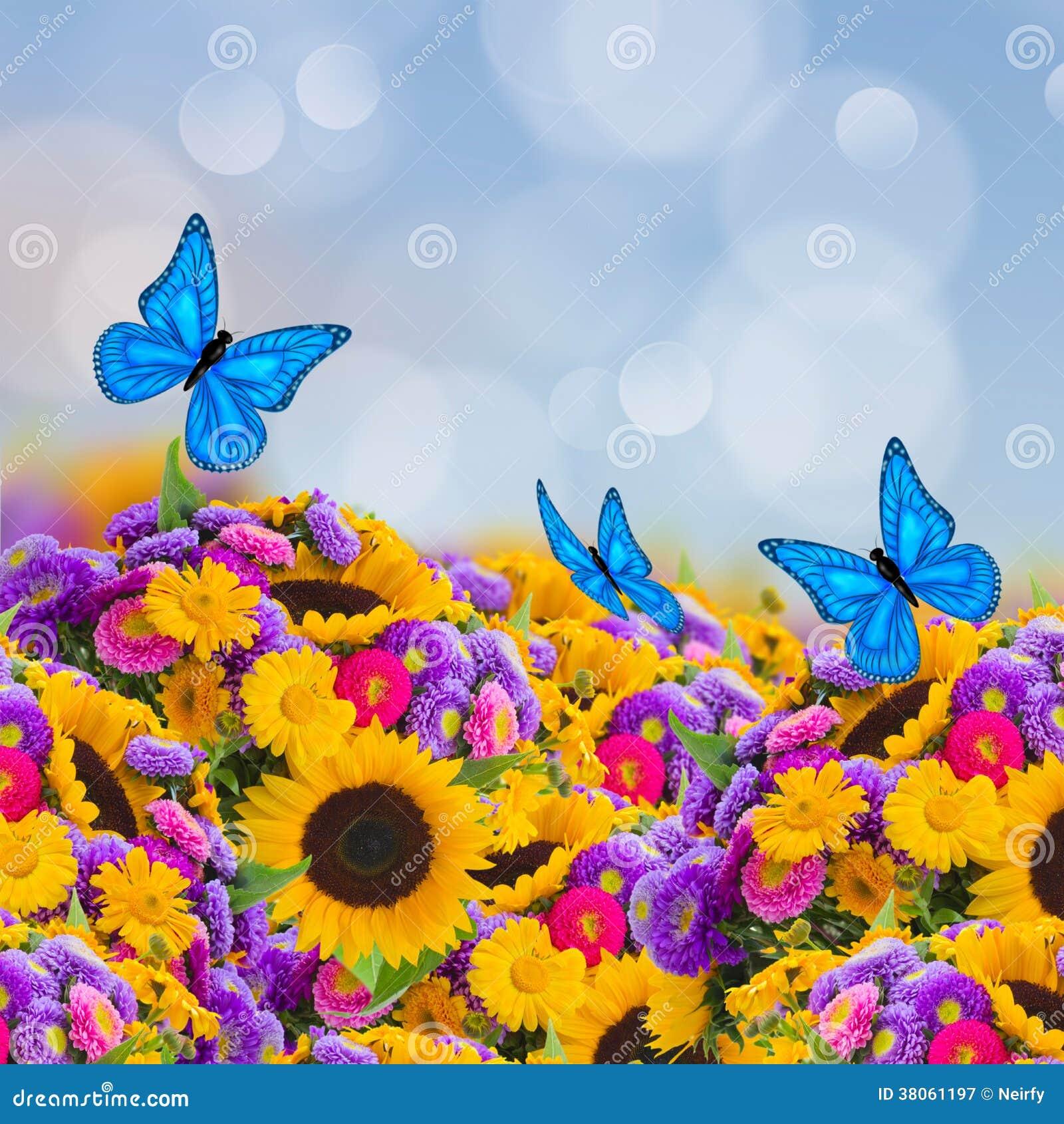 Giardino Di Fiori Con I Girasoli E Le Farfalle Fotografia Stock Libera da Dir...