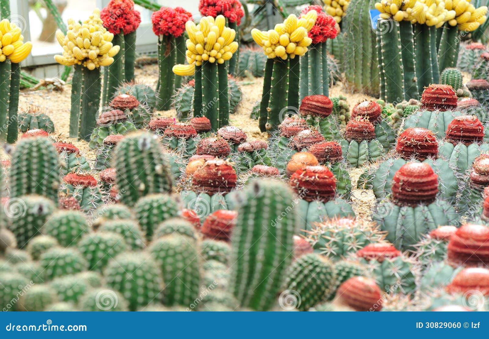 Giardino di fiori del cactus