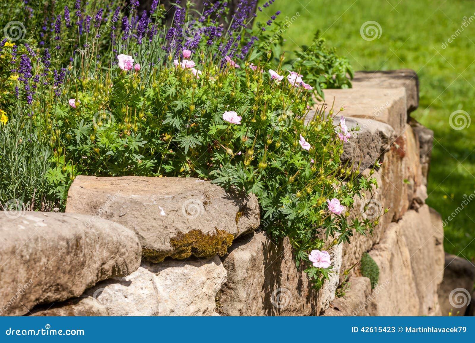 Giardino di rocce con i fiori fotografia stock immagine - Rocce per giardino ...