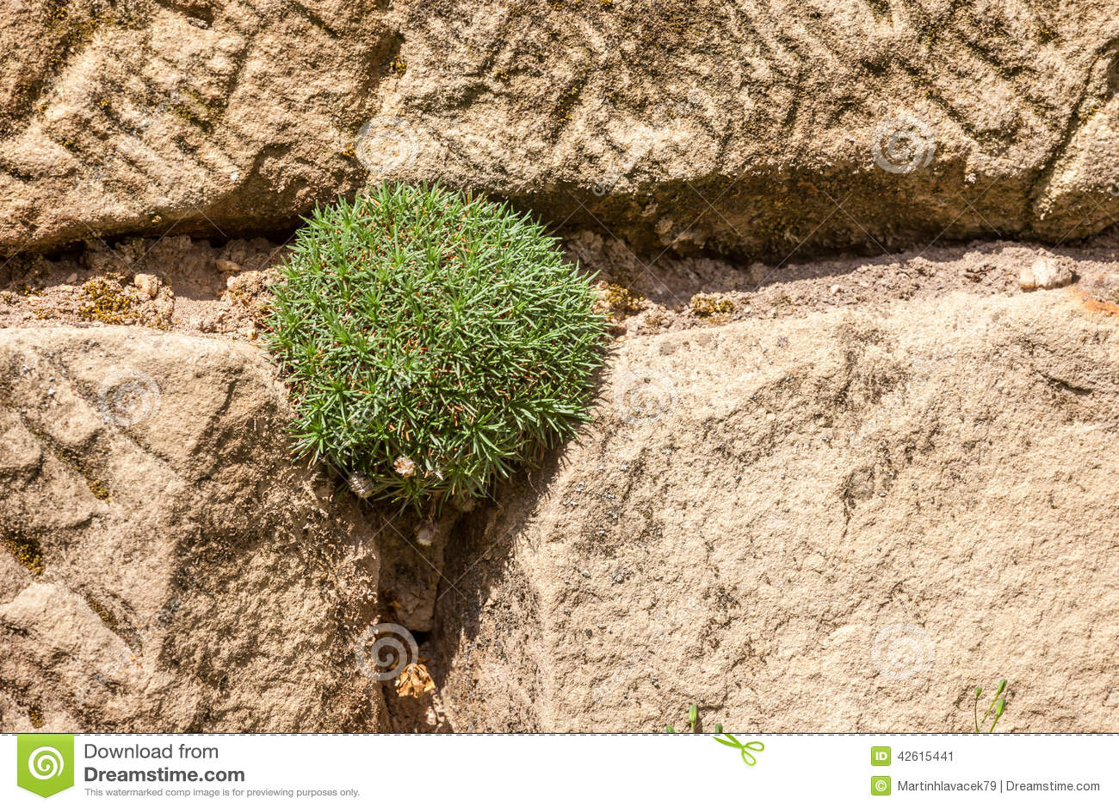 Giardino di rocce con il fiore fotografia stock immagine - Rocce per giardino ...