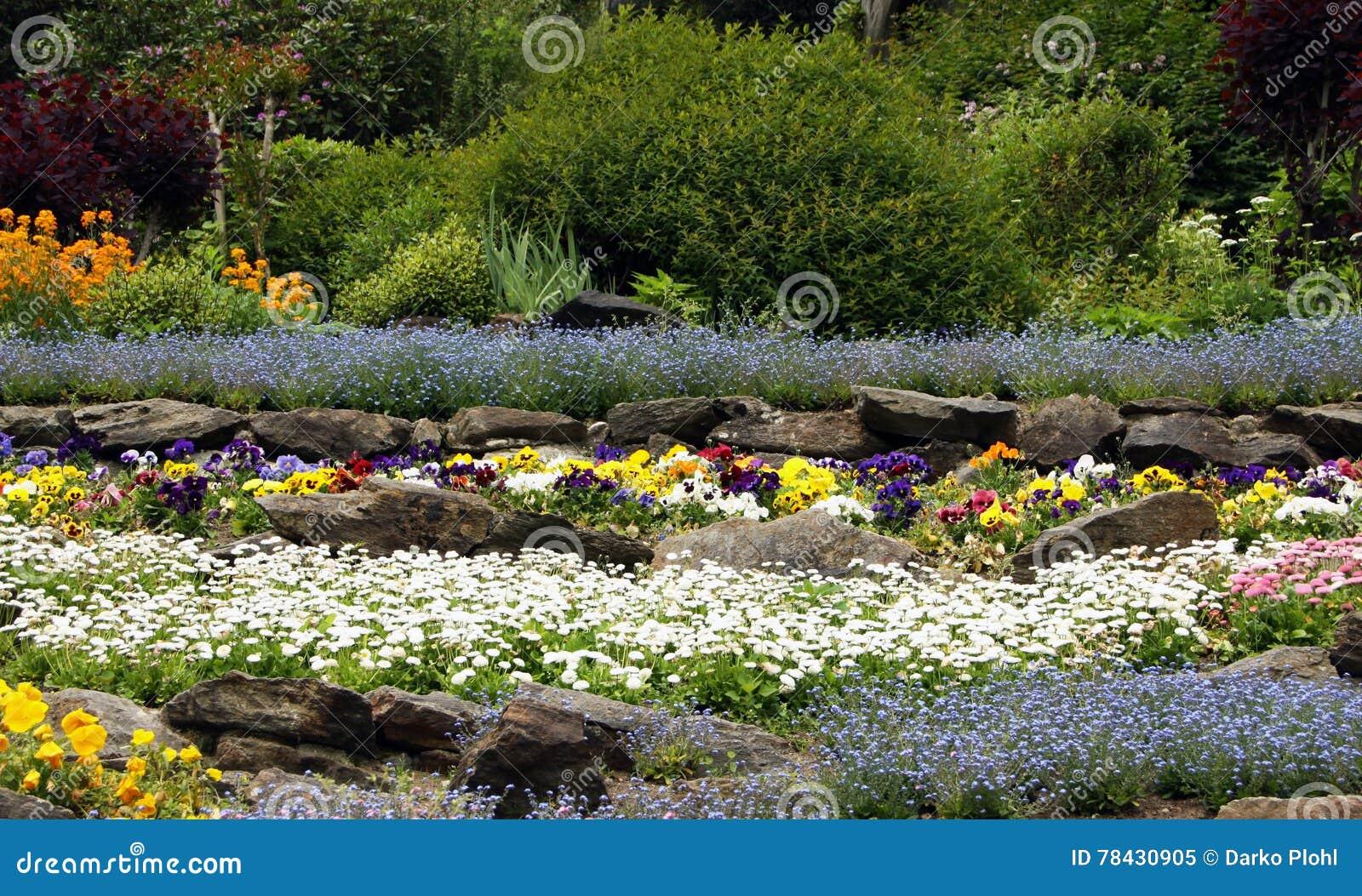 Giardino di rocce con le piante perenni di fioritura for Piante giardino perenni