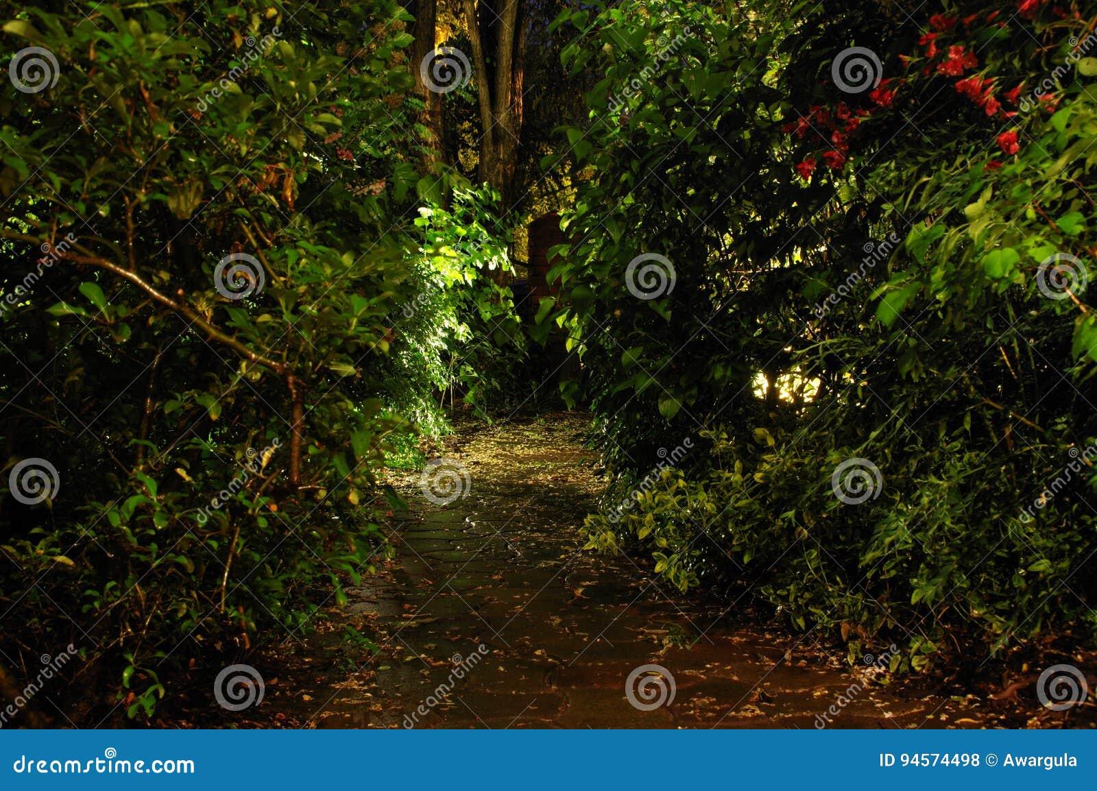 Giardino domestico di notte