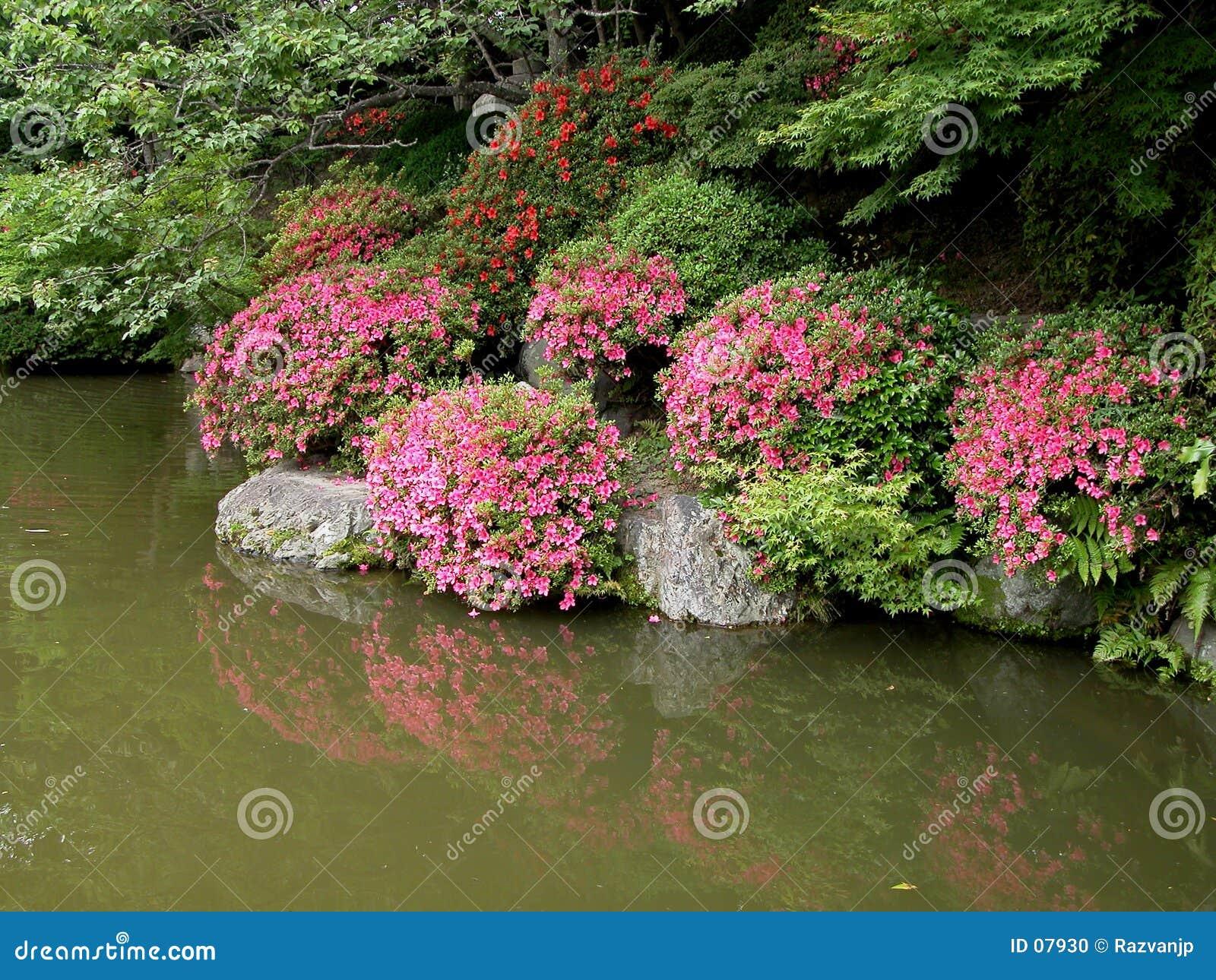 Download Giardino giapponese fotografia stock. Immagine di lago, alberi - 7930