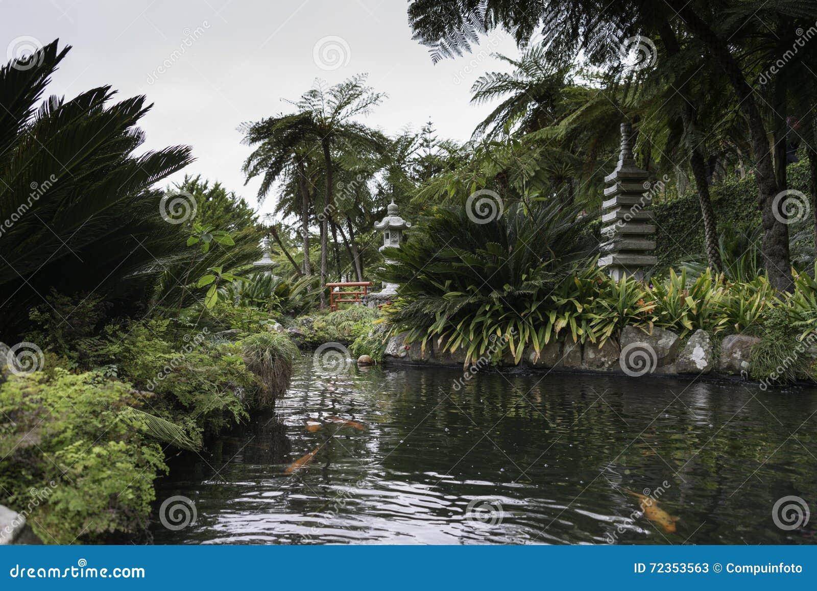 Giardino giapponese con le piante verdi dell 39 en del goldfich immagine stock immagine di - Piante per giardino giapponese ...