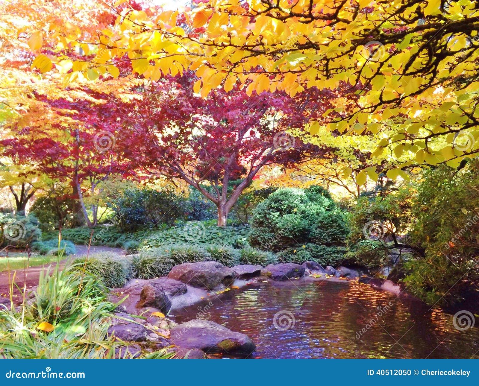 Giardino giapponese in parco lithia con le foglie colorate - Alberi colorati da giardino ...