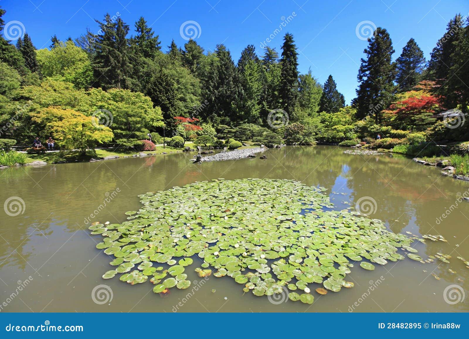giardino giapponese a seattle wa stagno con le ninfee