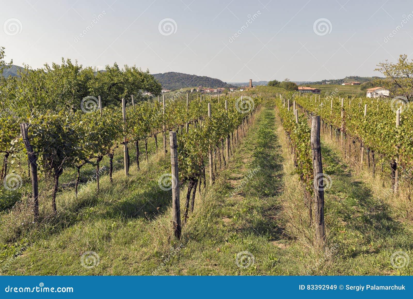 Giardino Mediterraneo Rurale Con La Vigna E Gli Alberi Da