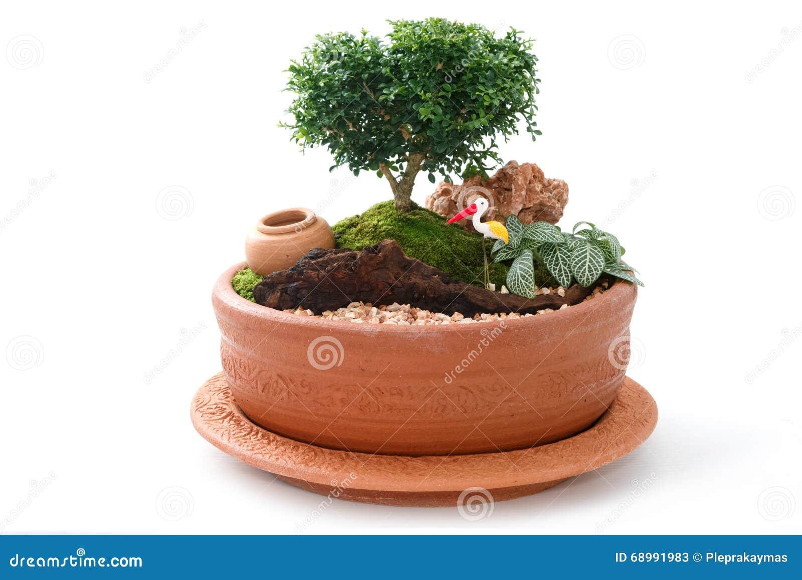 Giardino miniatura in un vaso immagine stock immagine - Giardino in miniatura ...