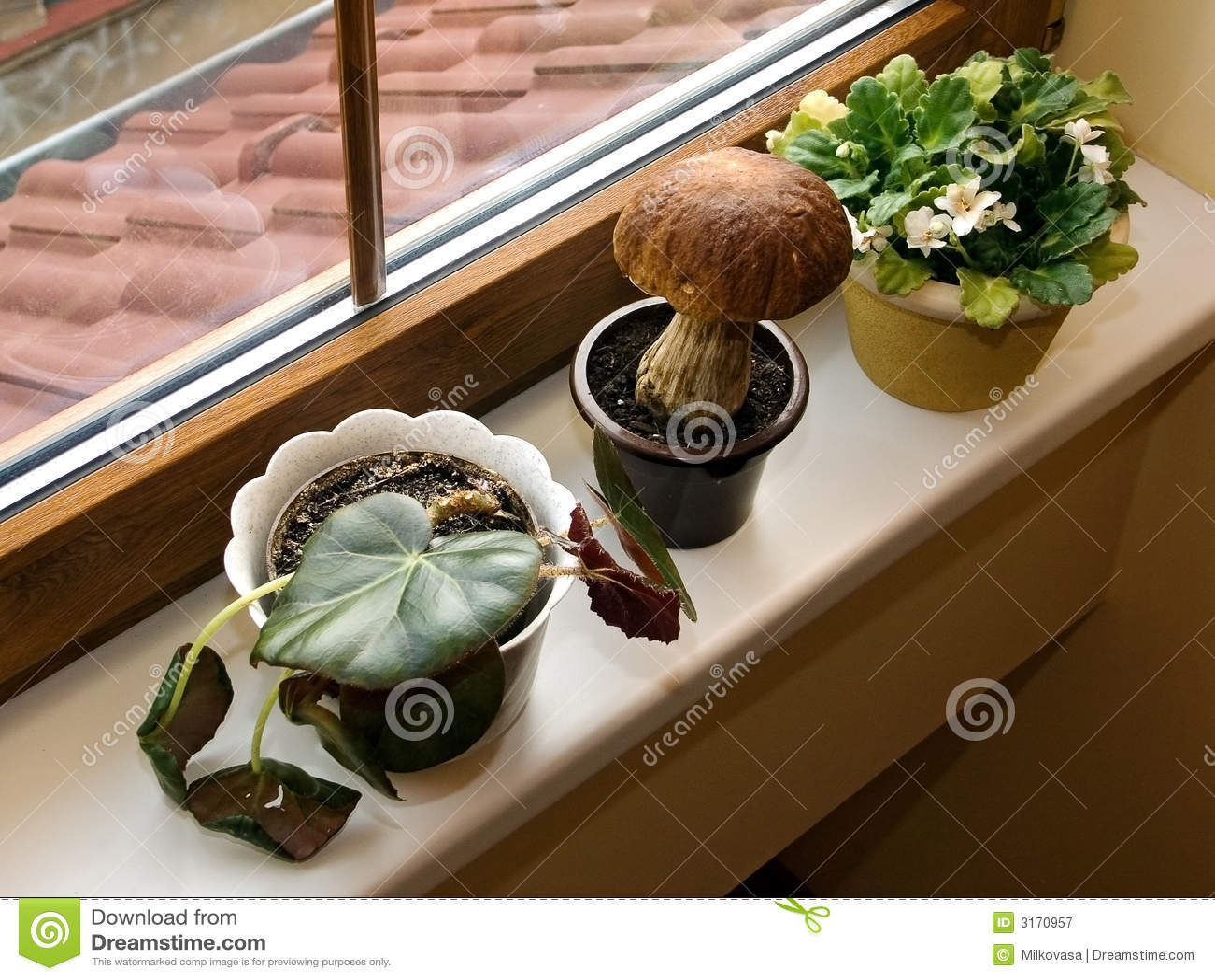 Giardino sul davanzale della finestra