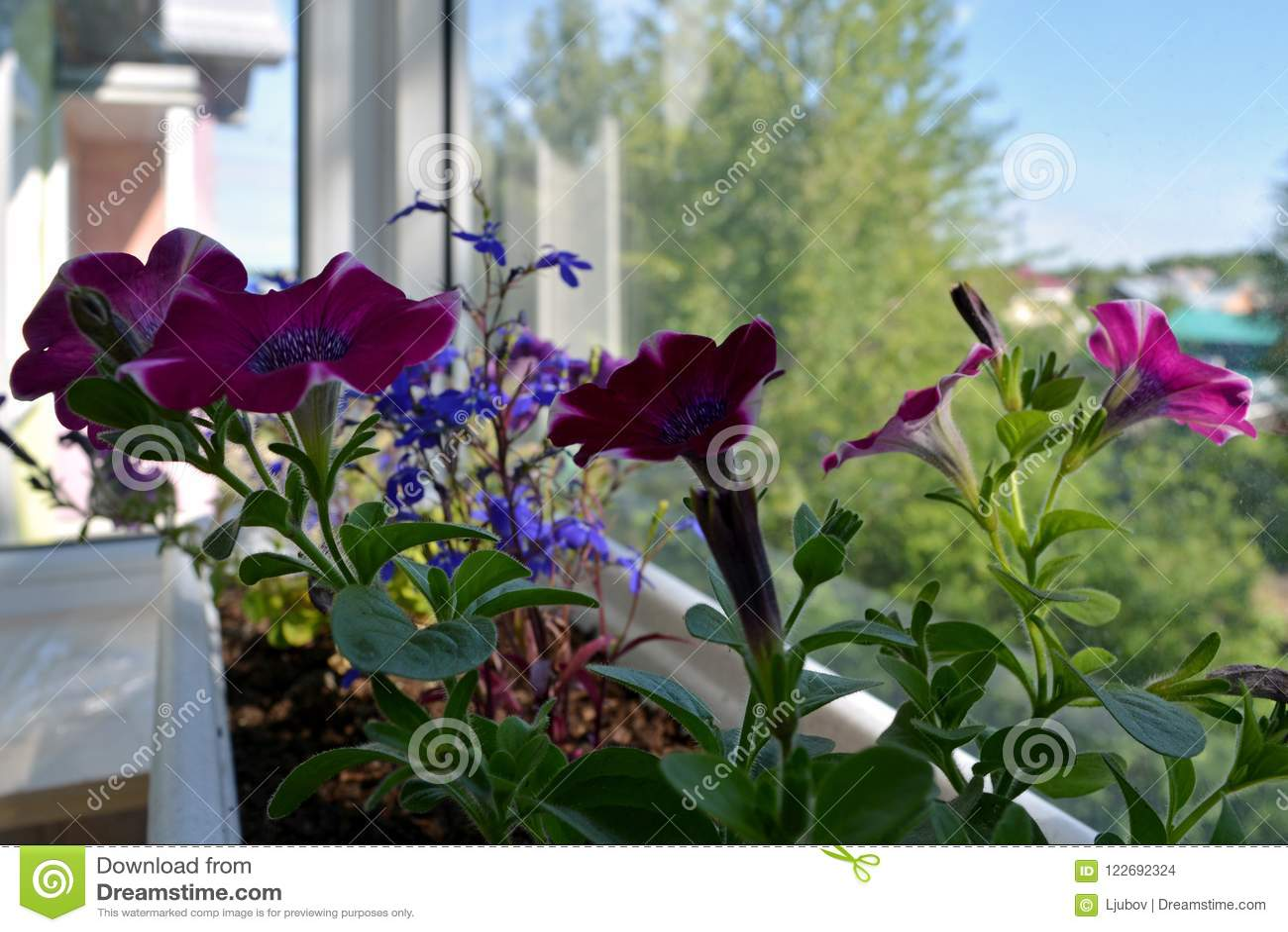 Giardino Sul Balcone Di Casa : Come realizzare un orto sul balcone youtube