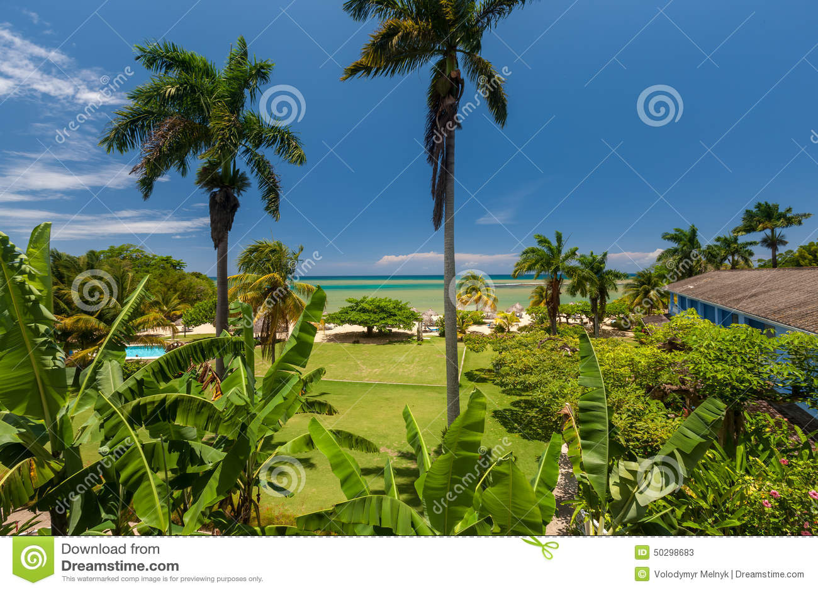 ... con i fiori e le palme che trascurano loceano con cielo blu