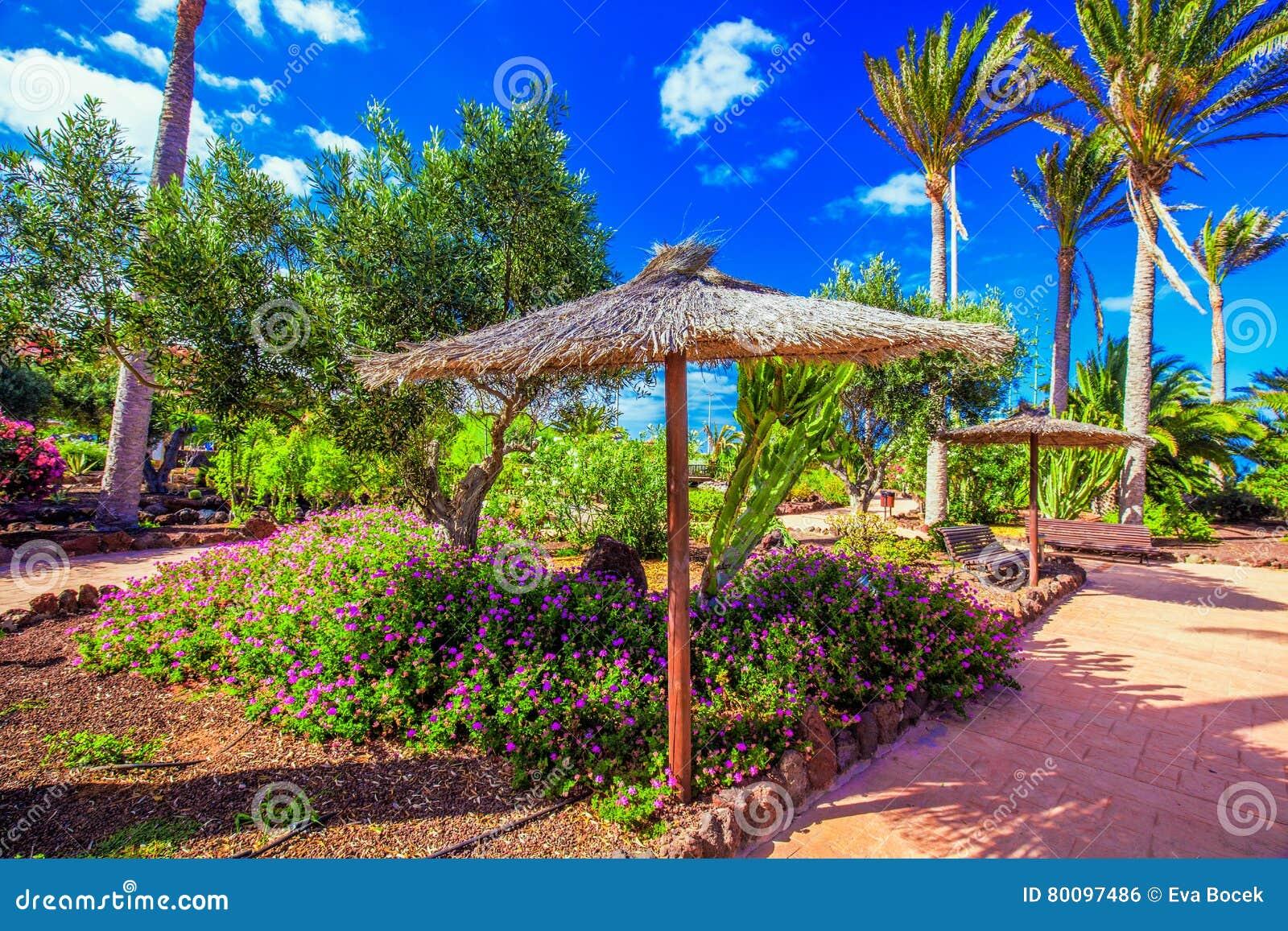 Giardino Tropicale Della Località Di Soggiorno Di Isola Con Le Palme ...