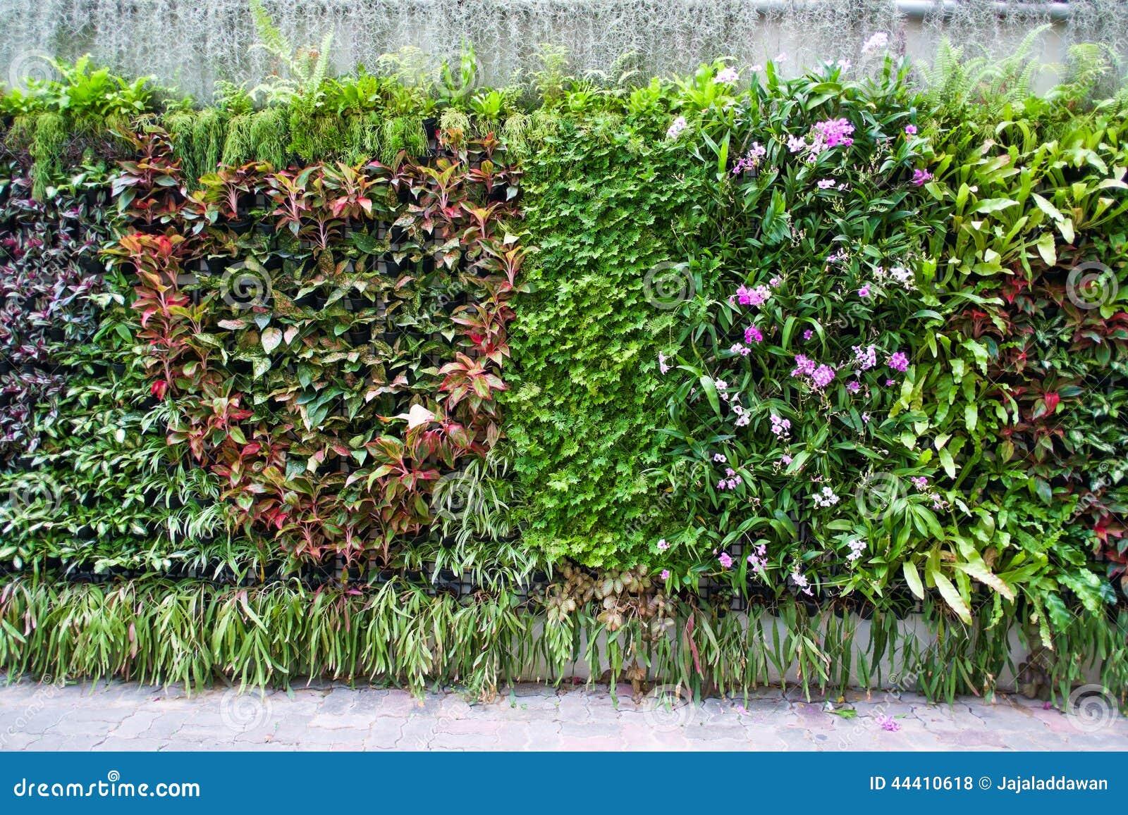 Giardino tropicale verticale fotografia stock immagine - Giardino tropicale ...