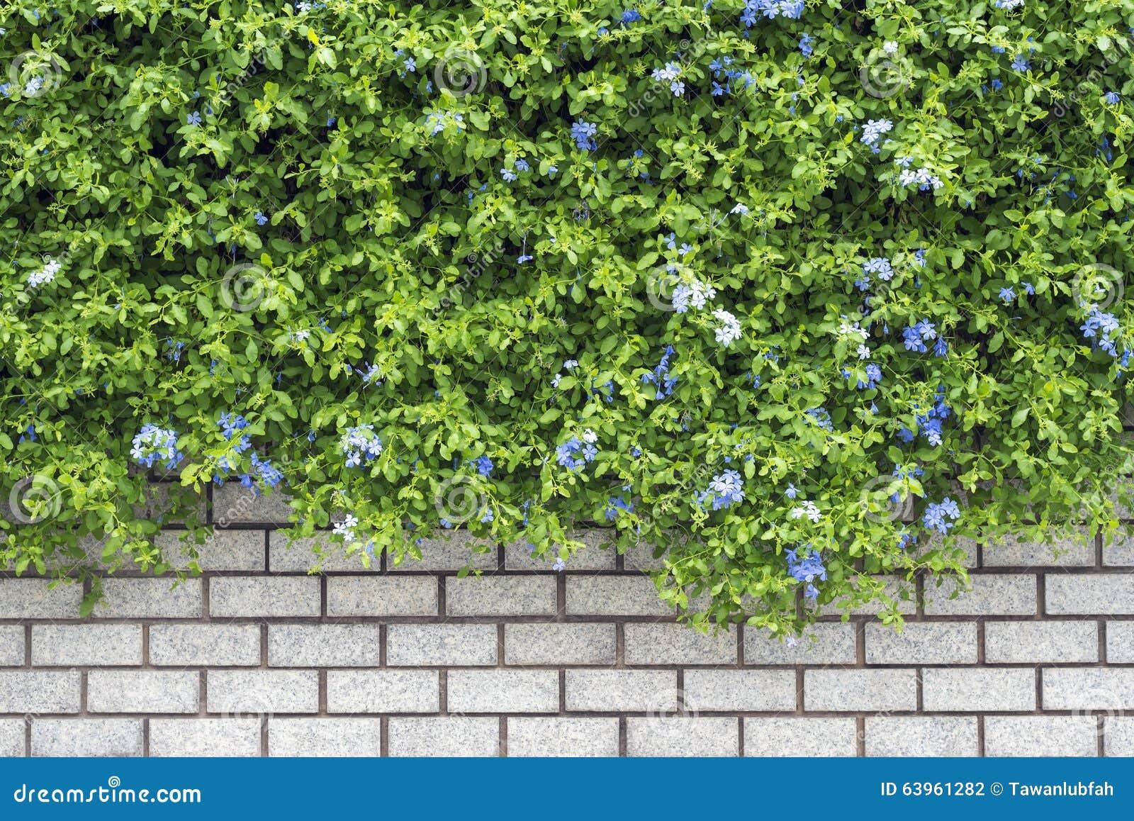 Mattoni Per Recinzione Giardino.Giardino Verde Decorativo Su Un Muro Di Mattoni Fotografia