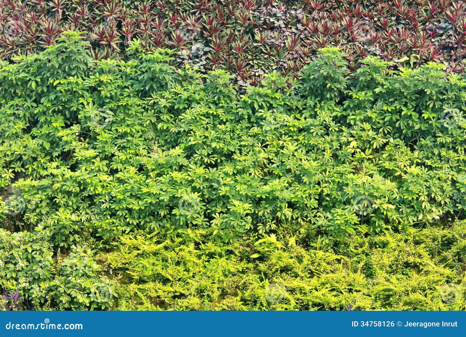 Giardino verticale immagine stock libera da diritti - Giardino verticale madrid ...