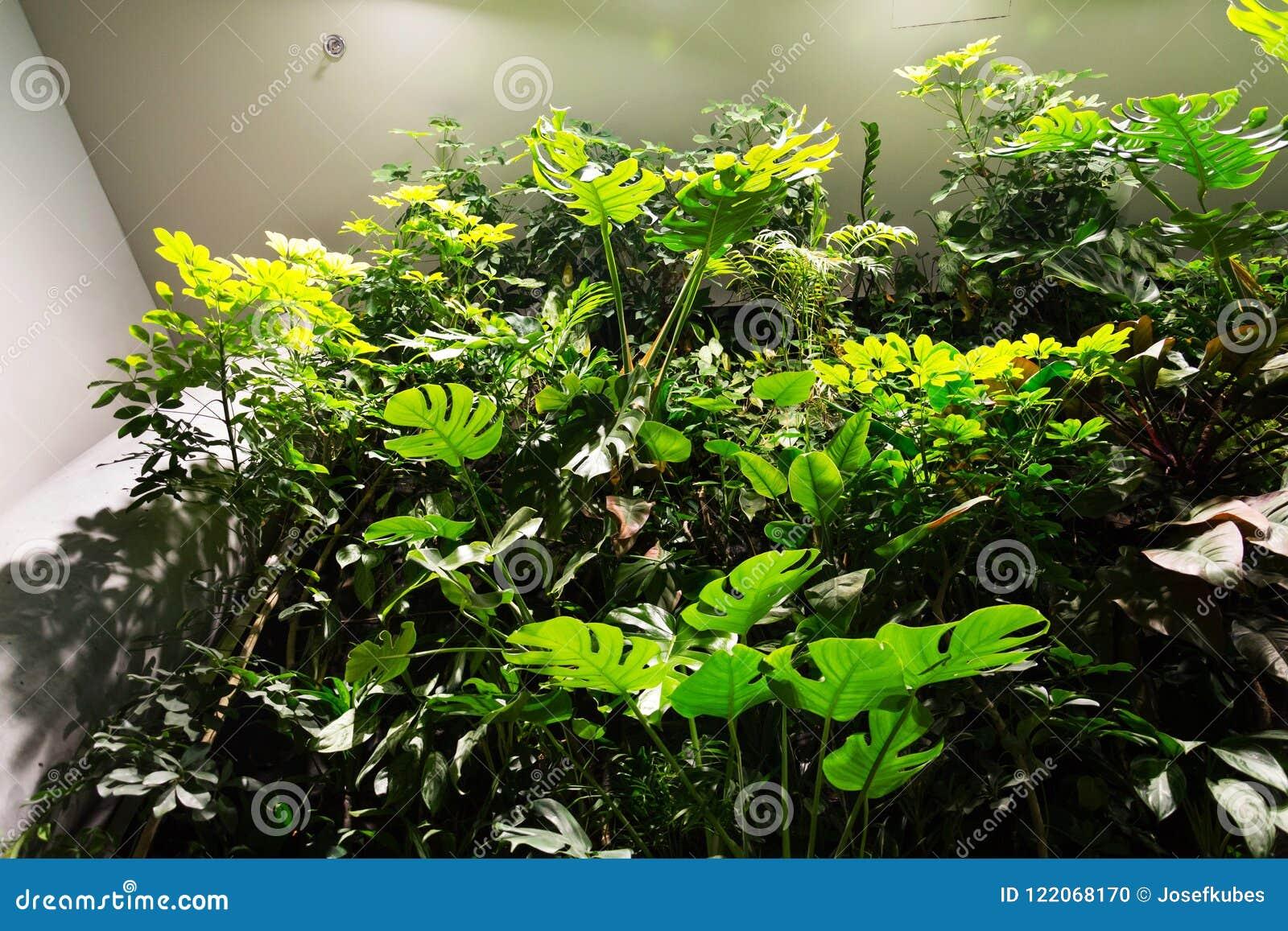 I led per l orticoltura nutrire le piante con la luce artificiale