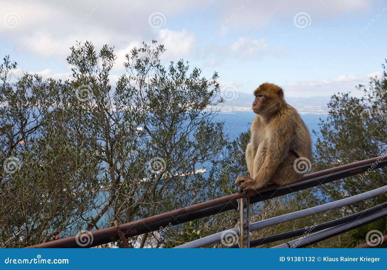 gibraltar sehenswürdigkeiten