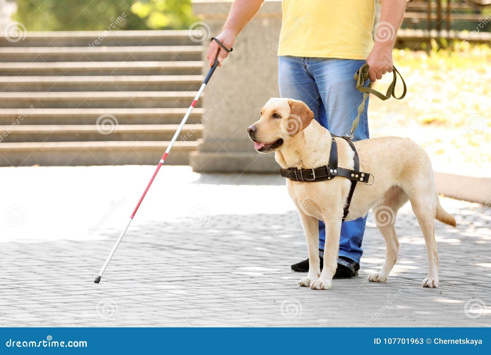 Gidshond die blinde helpen