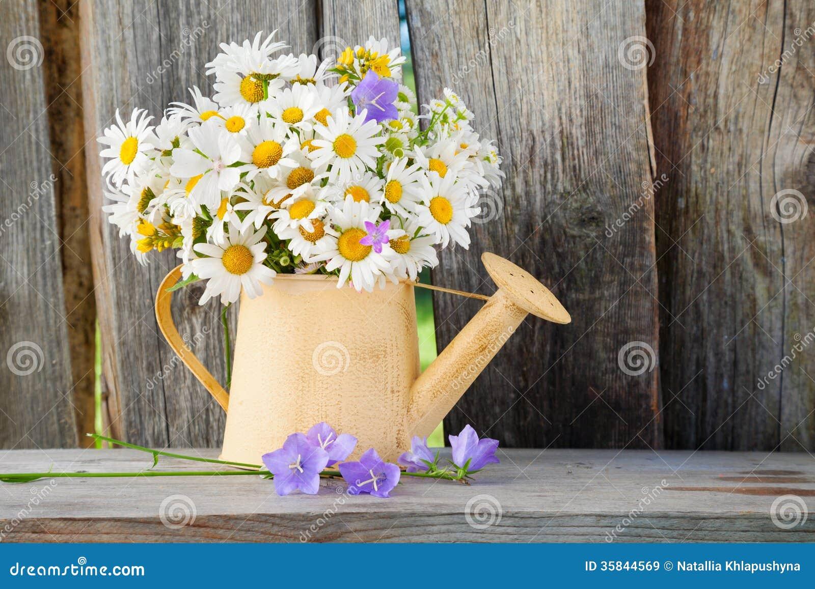Gießkanne mit Sommergänseblümchen blüht auf hölzernem Hintergrund
