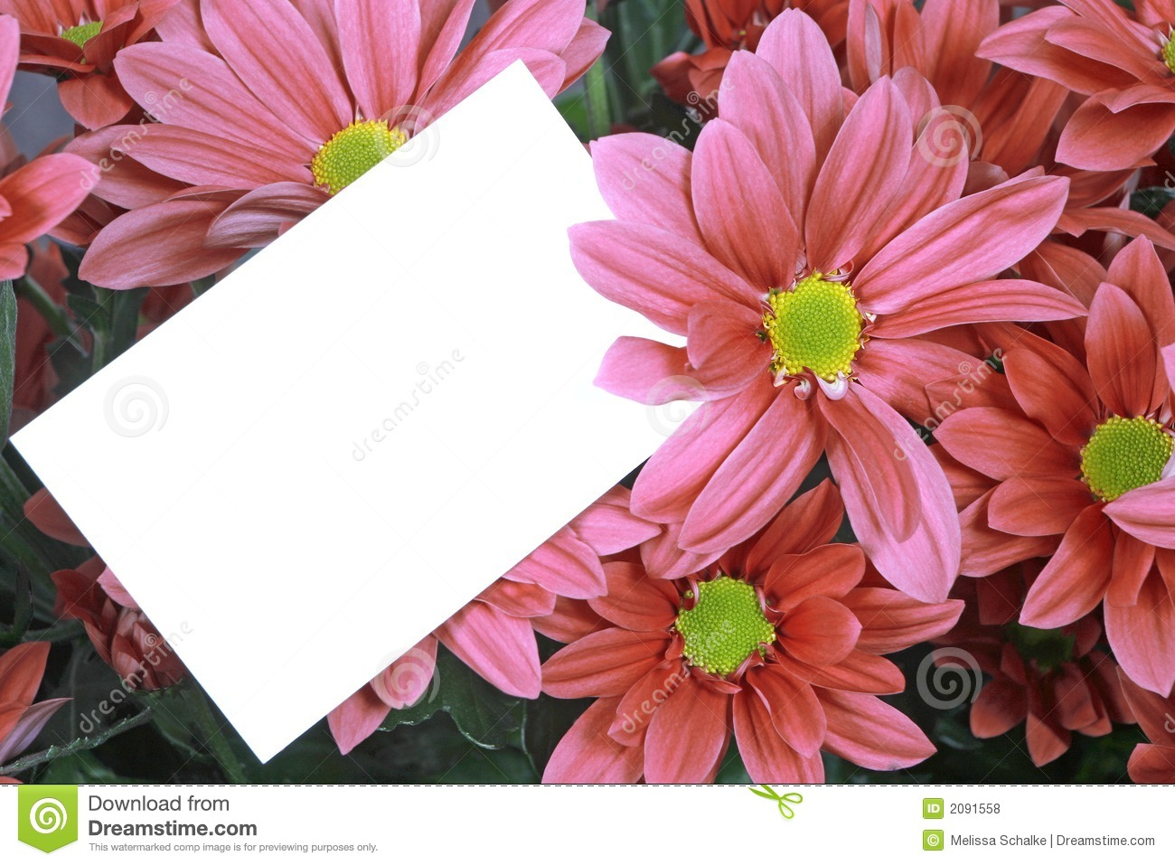 gift card and pink flowers stock photo image of message