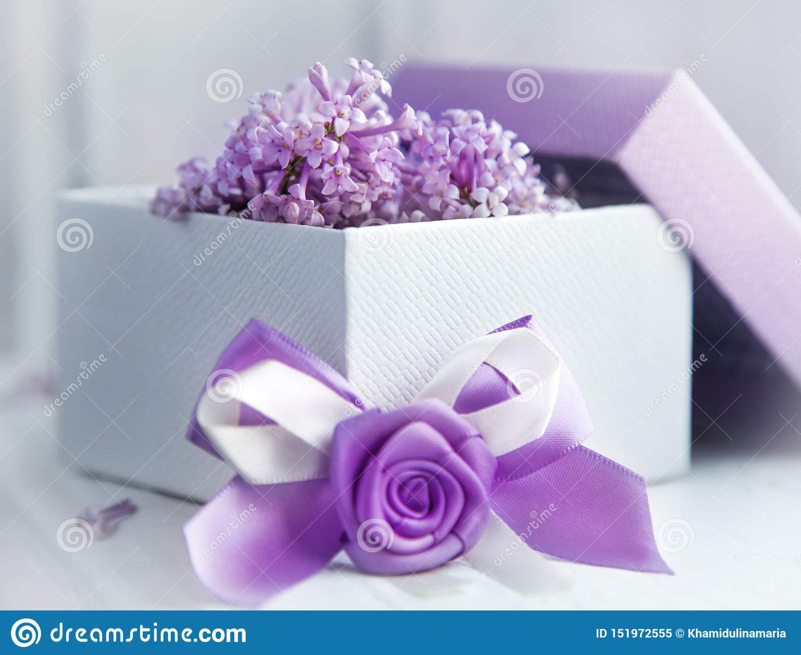Gift design in lilac color. Box with ribbon and blooming lilac.