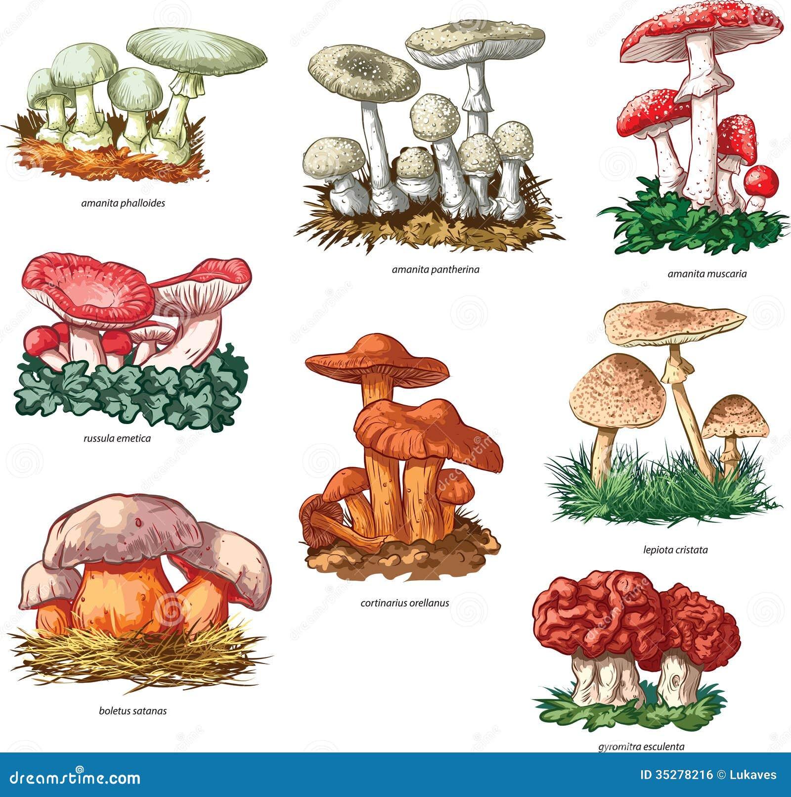 Giftige Paddestoelen Vector Illustratie Illustratie Bestaande Uit