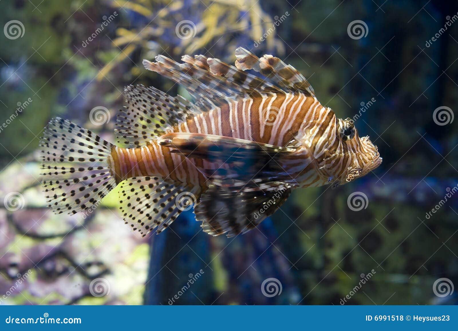 Giftige salzwasserfische lizenzfreie stockfotos bild for Salzwasser aquarium fische