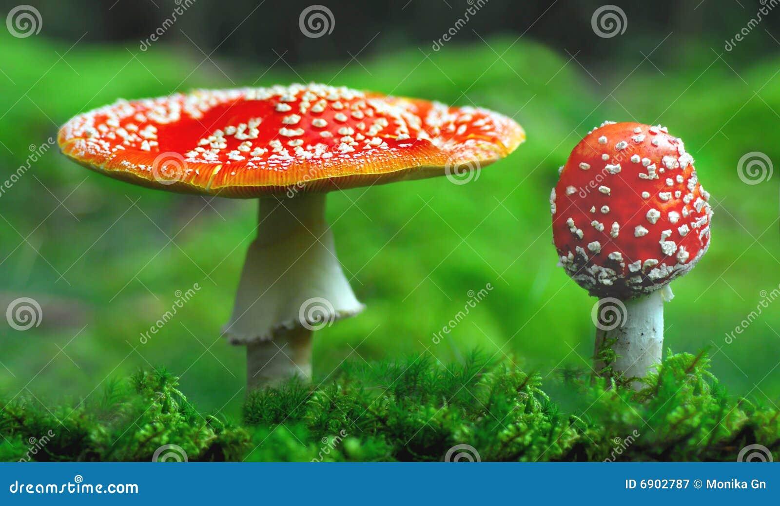 Giftige Toadstools