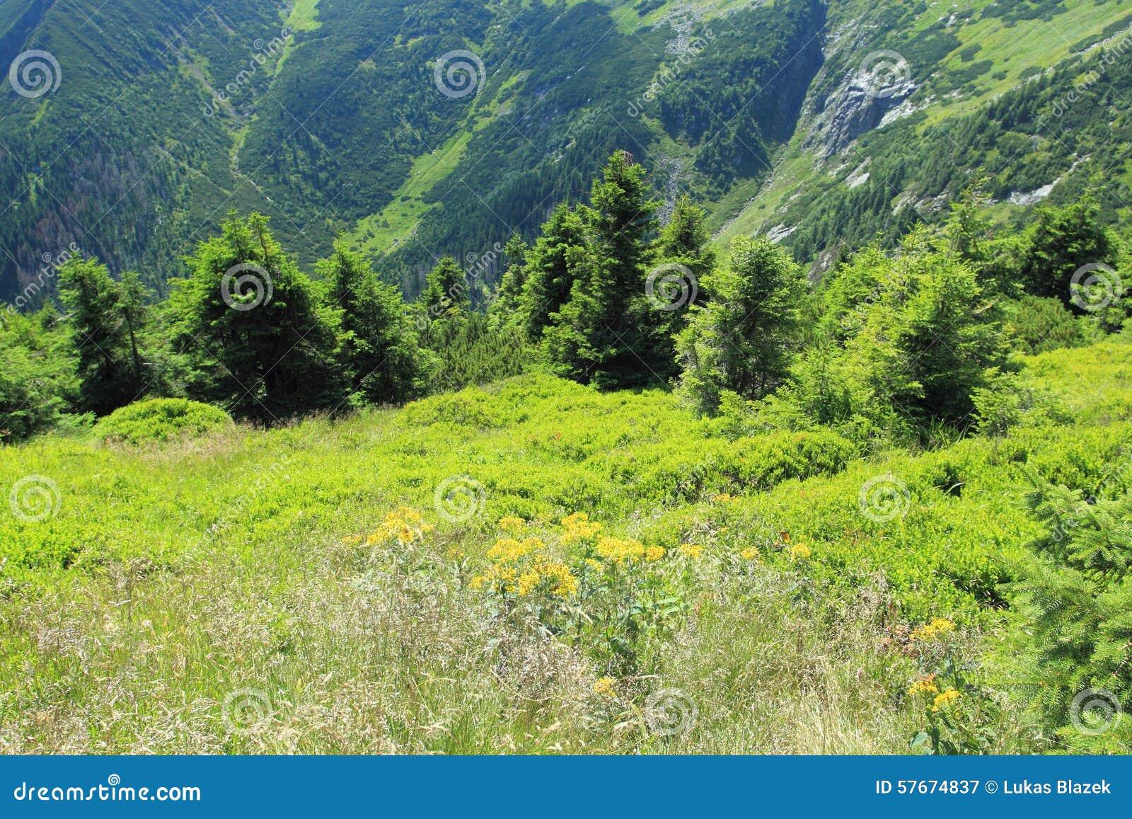 Gigant kopalnia w Gigantycznych górach