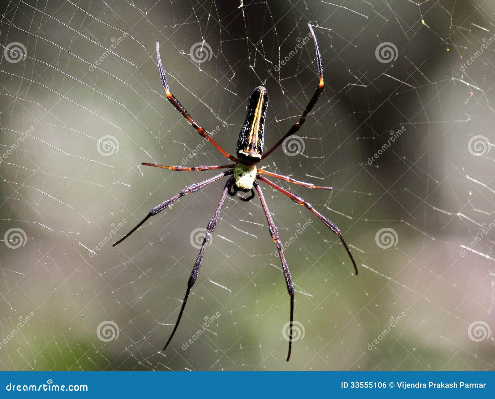 Gigantyczni Drewniani pająki