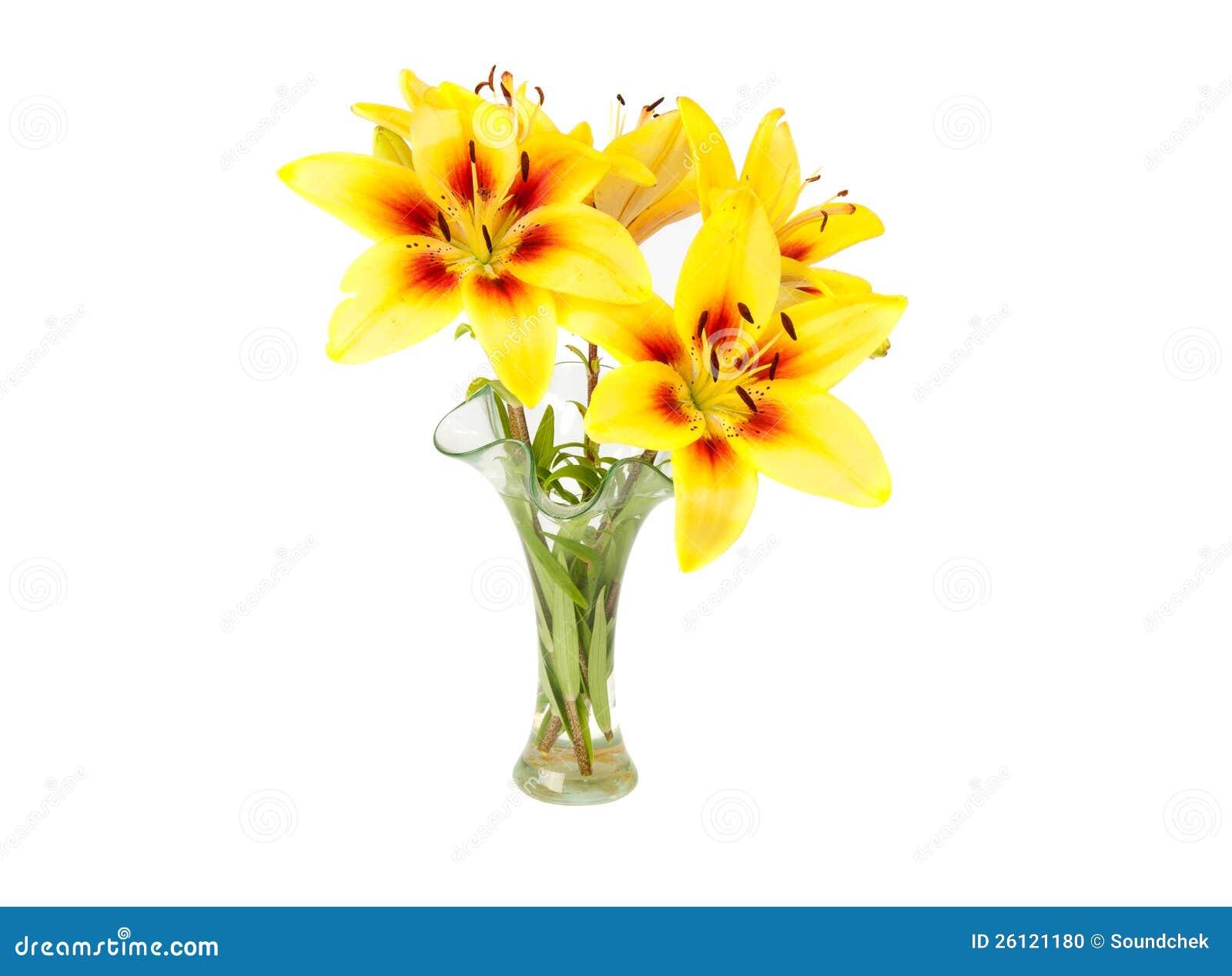 Giglio giallo in un vaso fotografia stock immagine 26121180 for Lilium in vaso