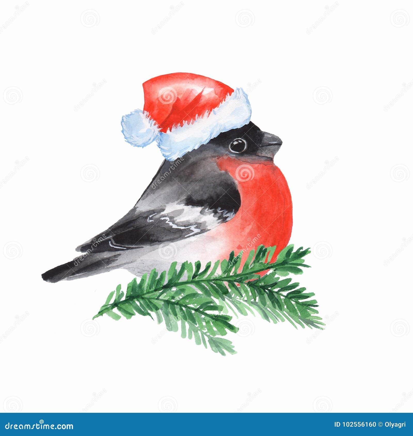 Gil Ptak Na Gałąź Ilustracji Ilustracja Złożonej Z Tło 102556160