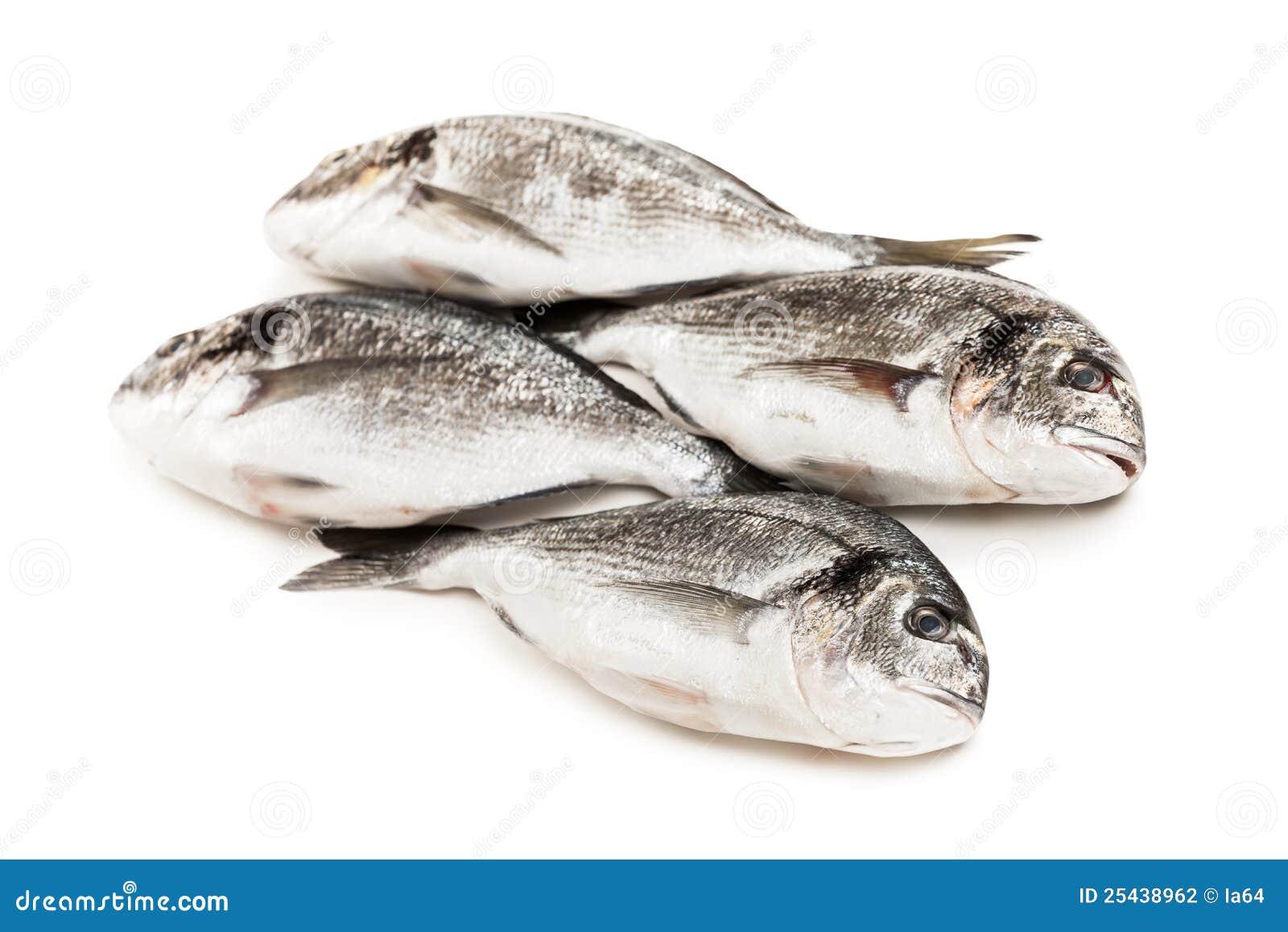 Gilthead Fish Food Stock Photography Image 25438962