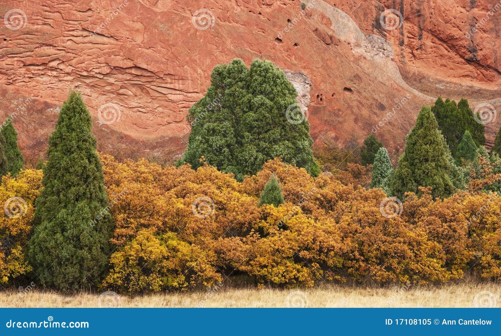 Ginepri e cespugli gialli con la roccia rossa fotografia for Cespugli giardino