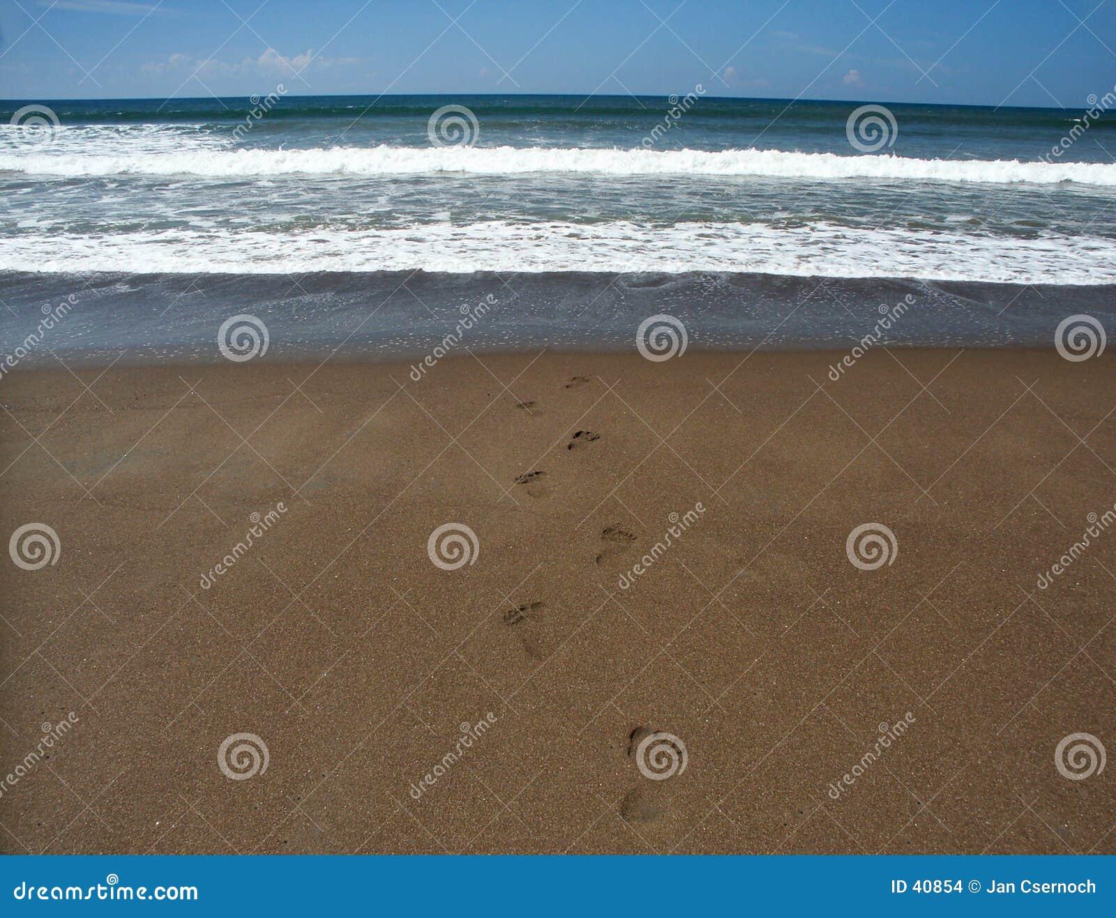 Ging want aan de oceaan zwem