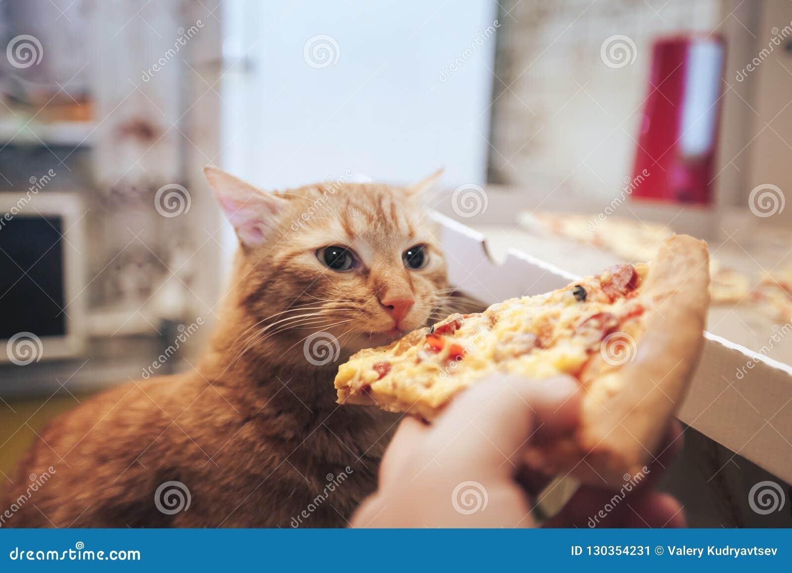 Gingembre et pizza