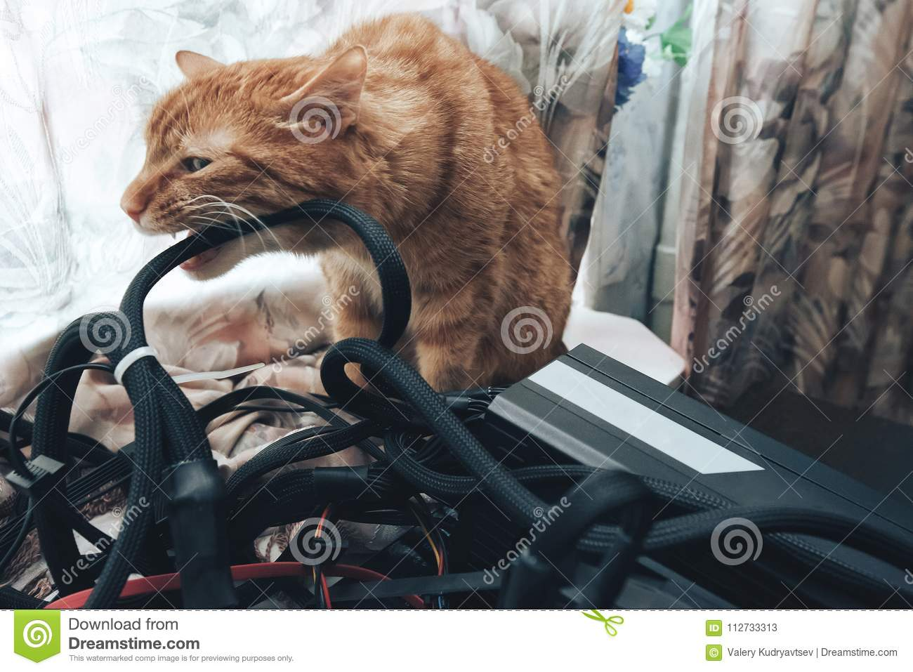 Ginger Cat Bite the Wires stock image. Image of kitty - 112733313