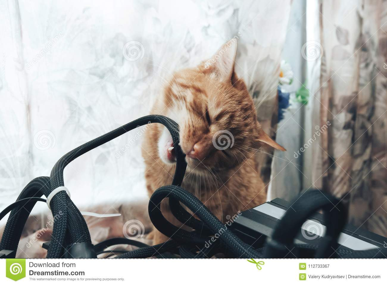 Ginger Cat Bite the Wires stock image. Image of attractive - 112733367