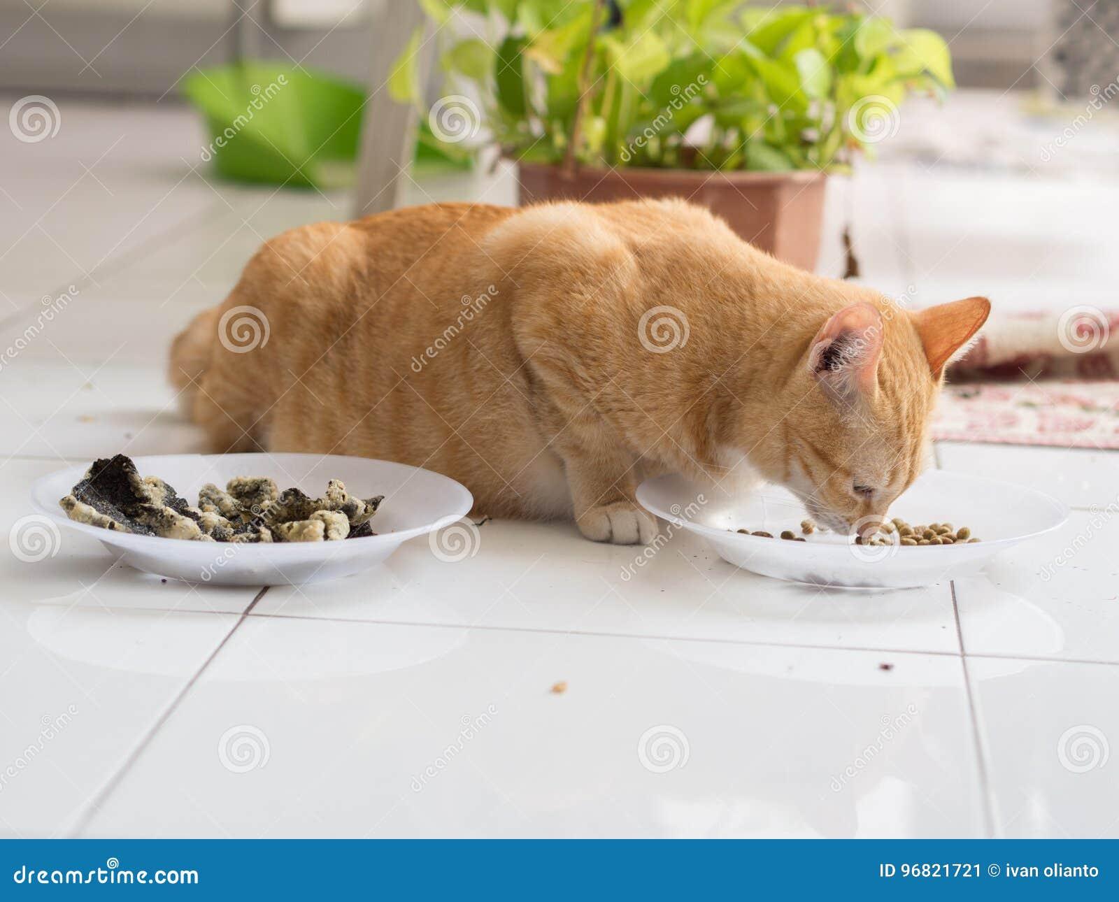 Ginger Cat Eating van Plaat