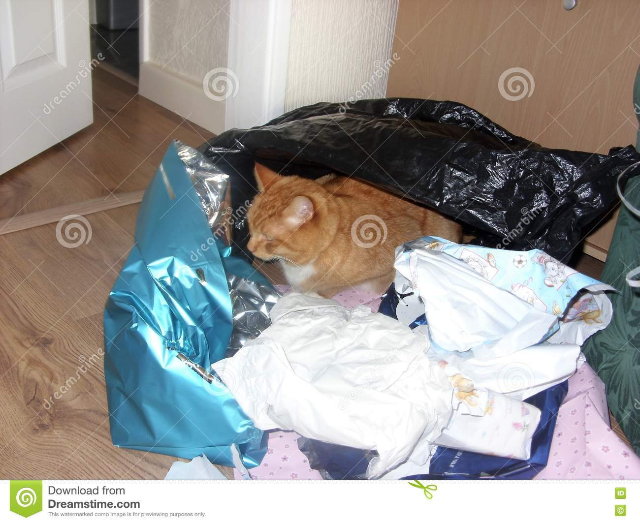 Ginger Cat Hides Amongst Gift-Wrapping
