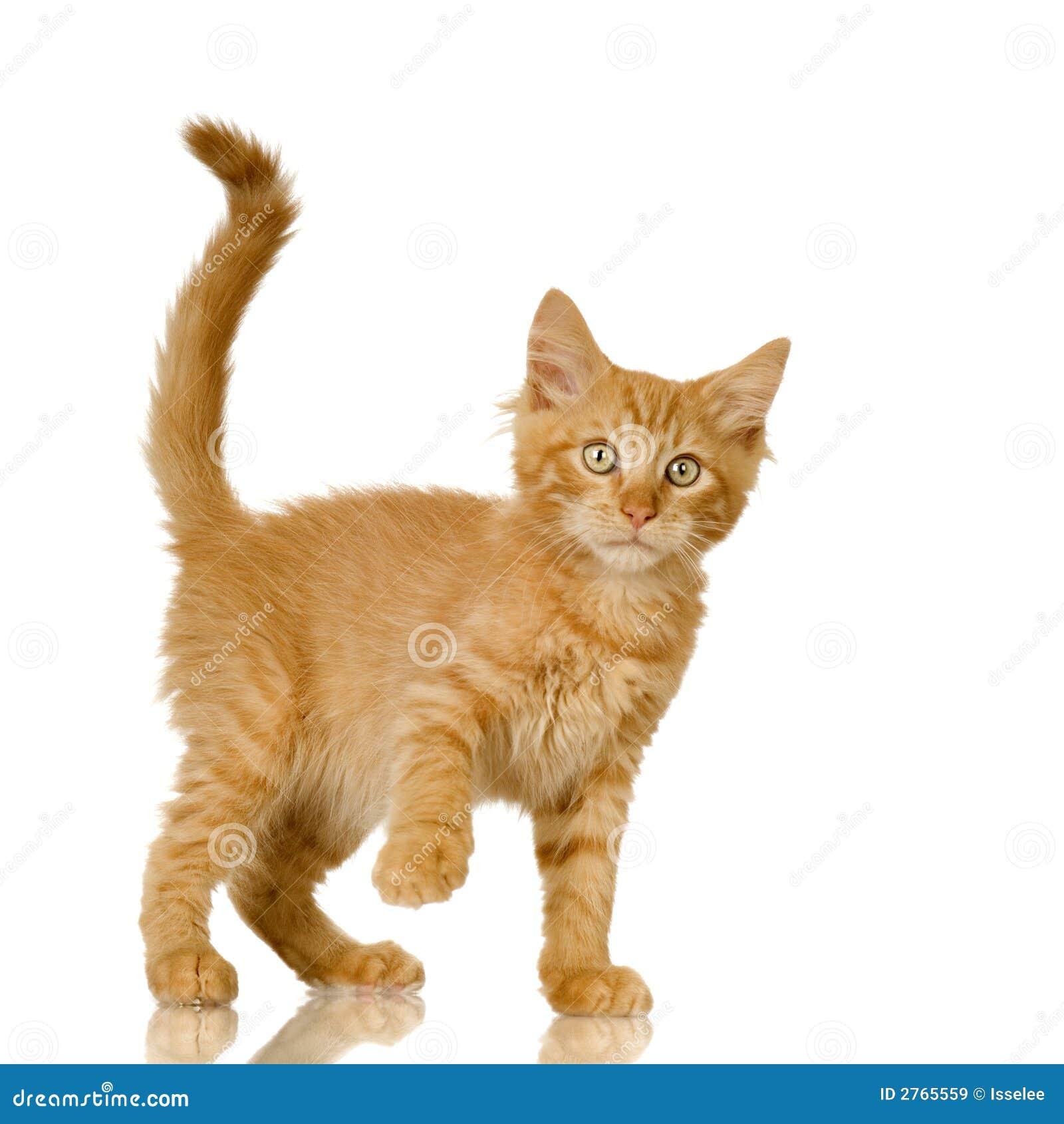Ginger Cat Kitten Royalty Free Stock Images - Image: 2765559