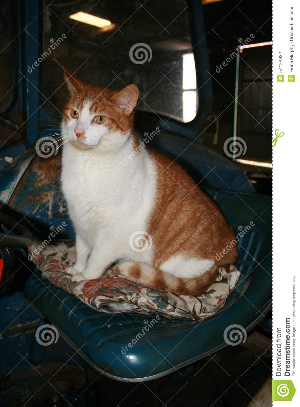 Old Time Tractor Seats : Ginger cat on an old tractor seat