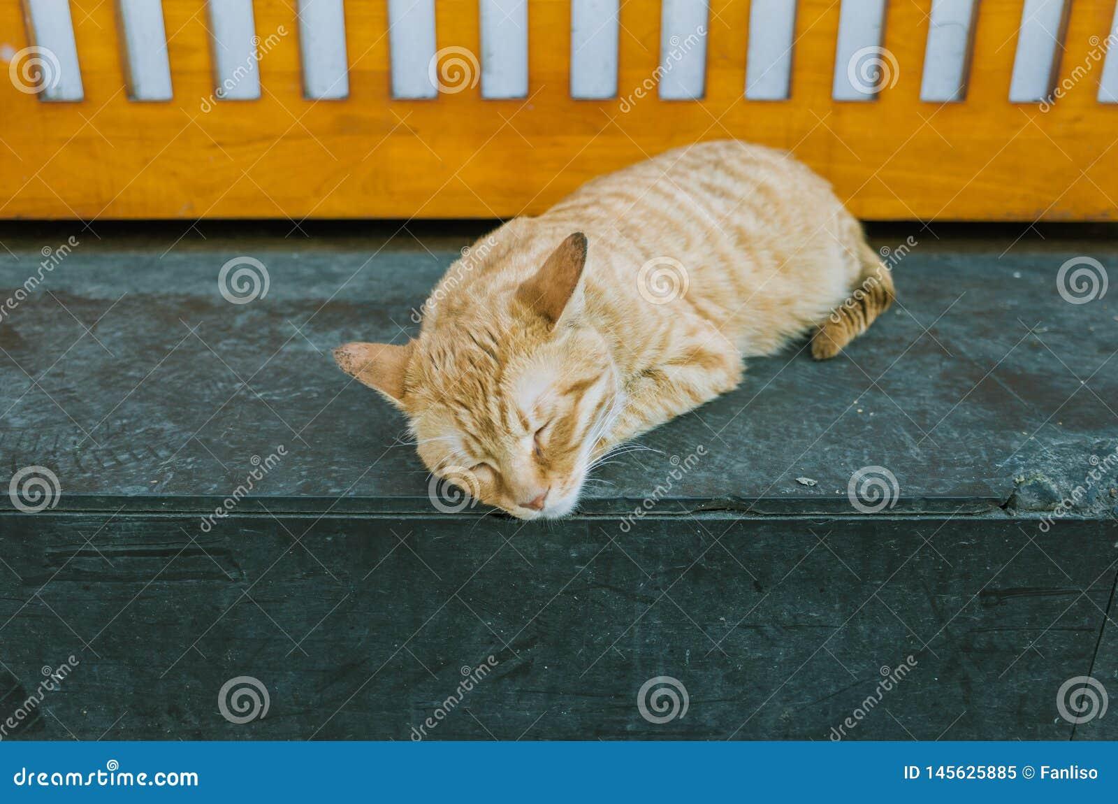 An orange cat sleeping at a shop corner
