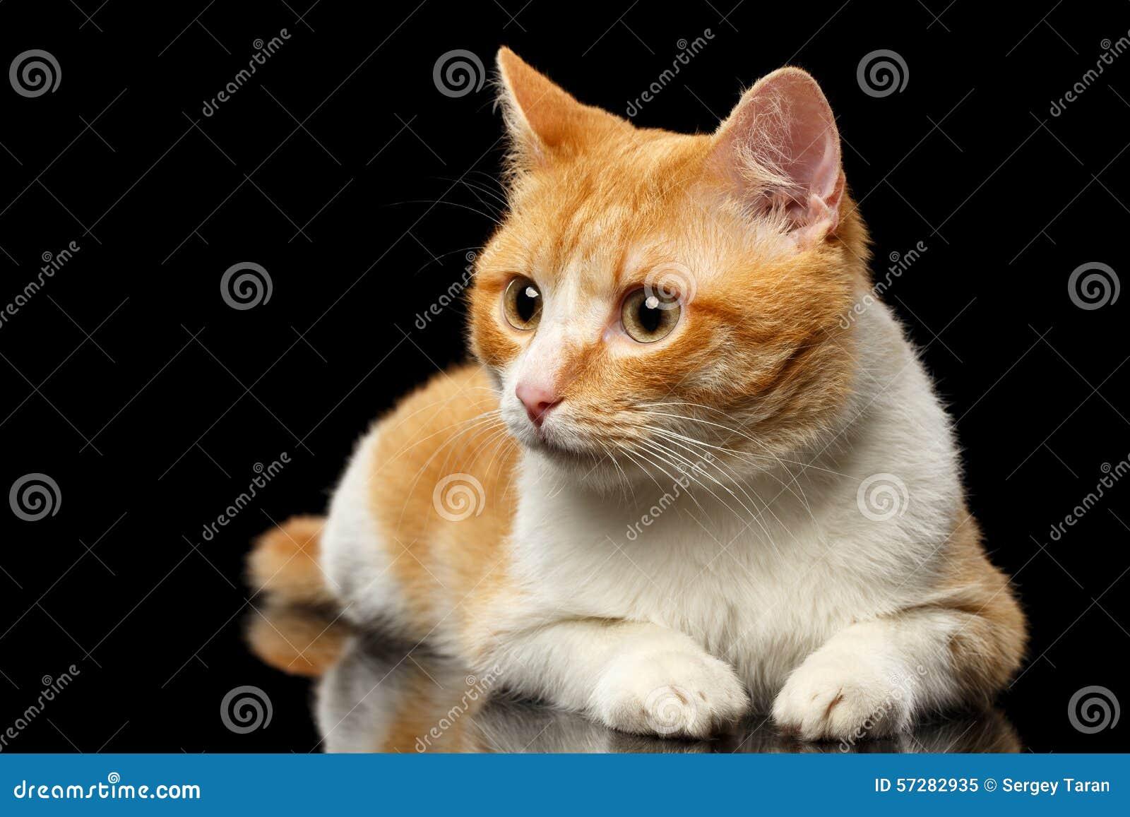 Ginger Cat Surprised Looking de mentira en la izquierda en el espejo negro