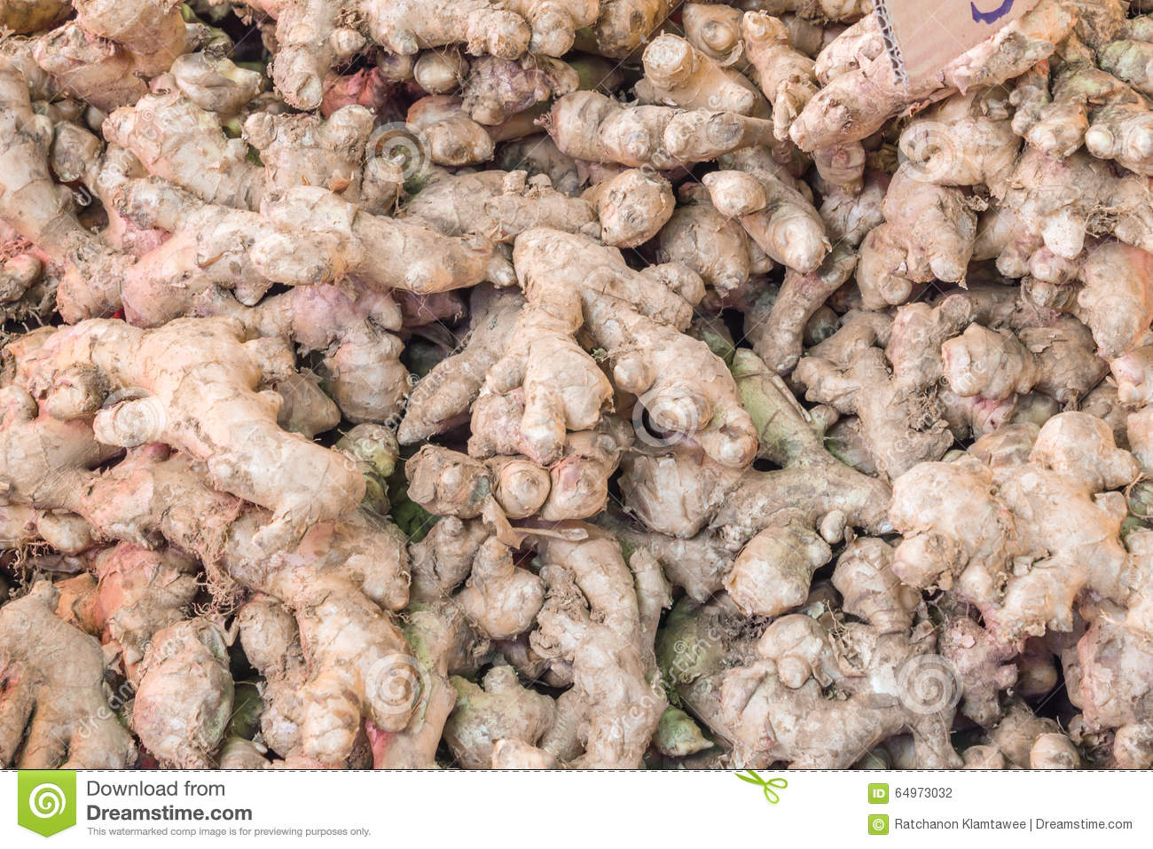 HOW TO BE A MULTI-MILLIONAIRE GINGER FARMER - A WINNING BUSINESS PLAN