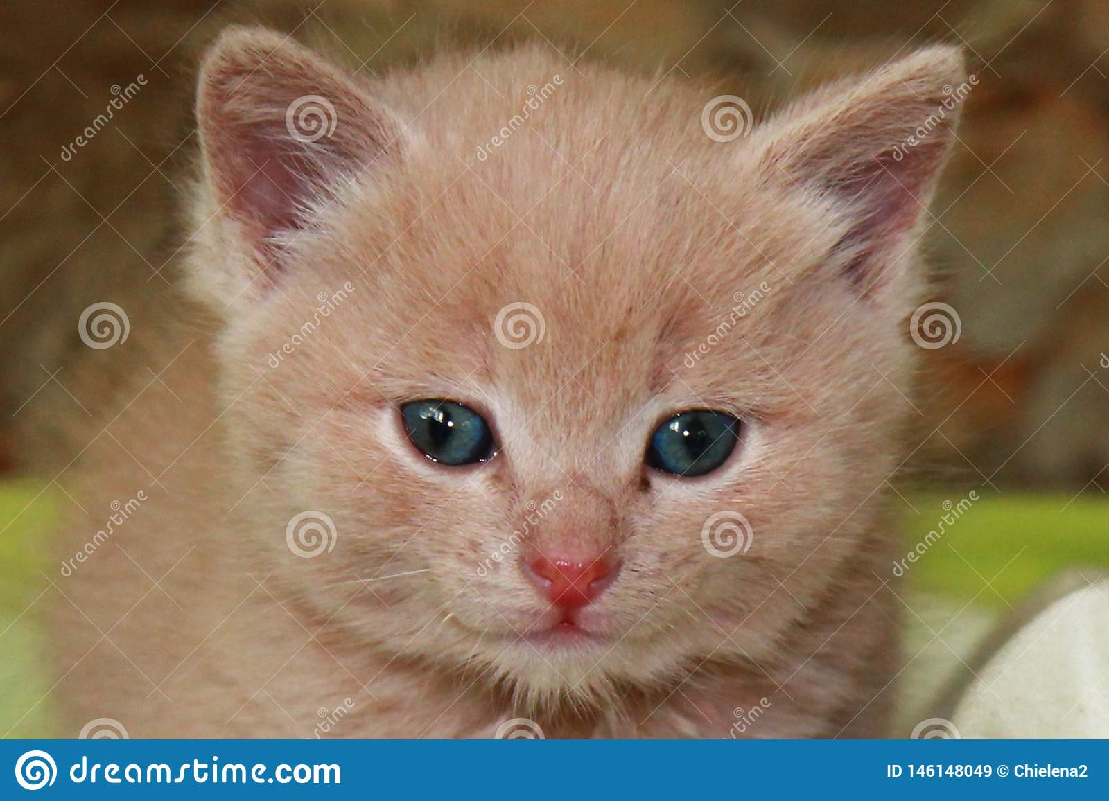 Ginger little kitten with blue eyes on a green background