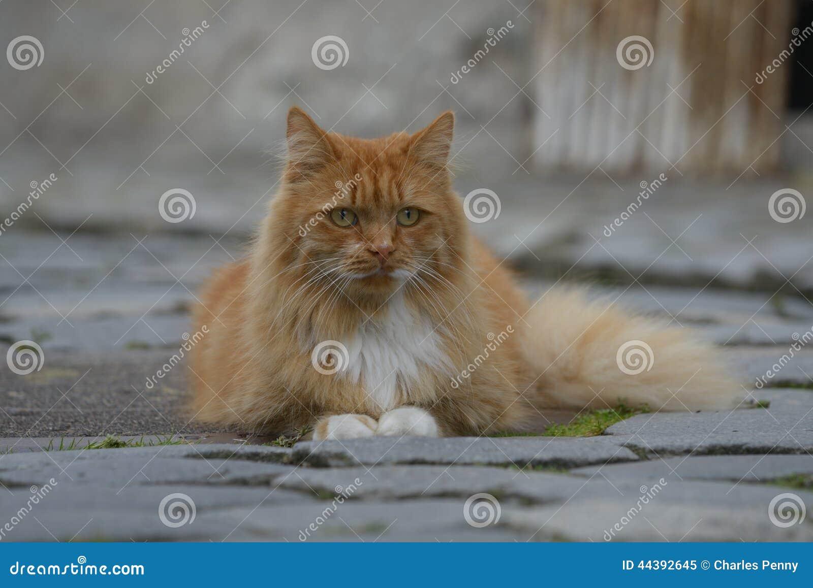 damer stavanger cat people oslo