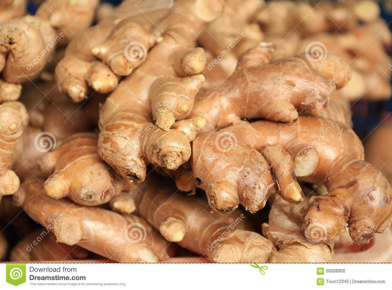 Ginger Cultivation Business | Information Guide