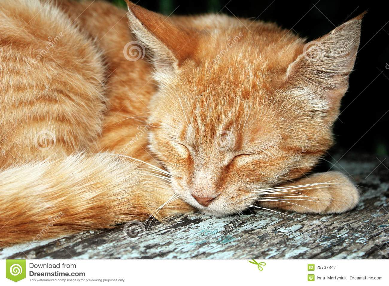 Ginger Tabby Cat Royalty Free Stock Photography Image